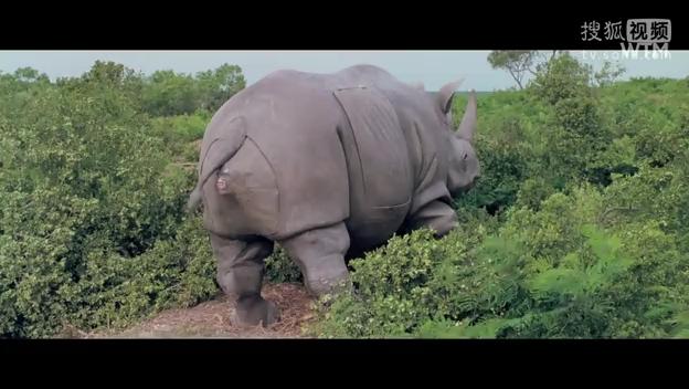 神探飞机头3-360影视-最新最全最受欢迎的影视网站