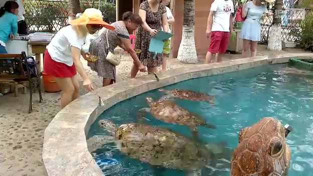 三亚西岛看海龟