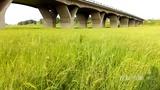 【山东】最大河流干涸断流长满青草如草原 农民河底放羊